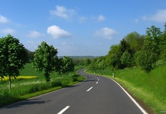 Nature, road, green