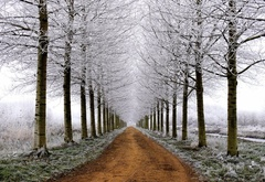 road, the first day of winter, the trees, snow