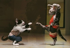 Fighting, Kung-Fu cats
